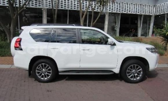 Buy Used Toyota Prado White Car in Rundu in Namibia