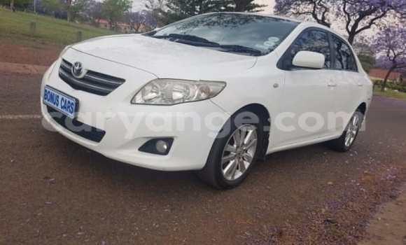 Buy Used Toyota Corolla White Car in Omaruru in Erongo