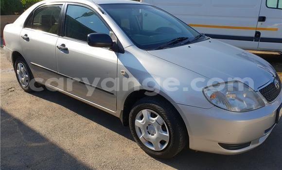 Buy Used Toyota Corolla Silver Car in Grootfontein in Namibia