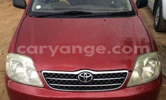 Buy Used Toyota Corolla Red Car in Windhoek in Namibia
